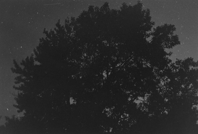 Black-and-white photograph of the silhouette of a tree against a night sky