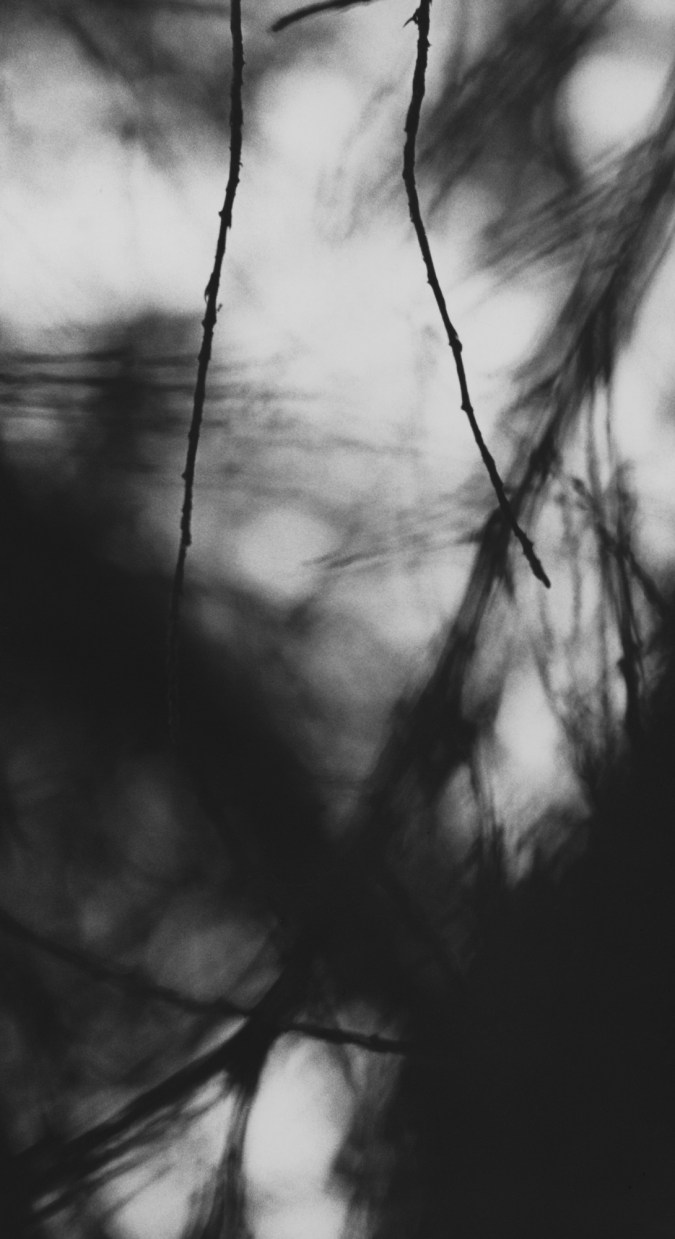Black-and-white photograph of two thin bare branches against a blurred background of pine branches