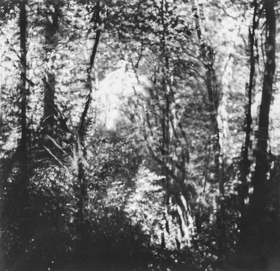 Black-and-white multiple-exposure photograph of light through trees