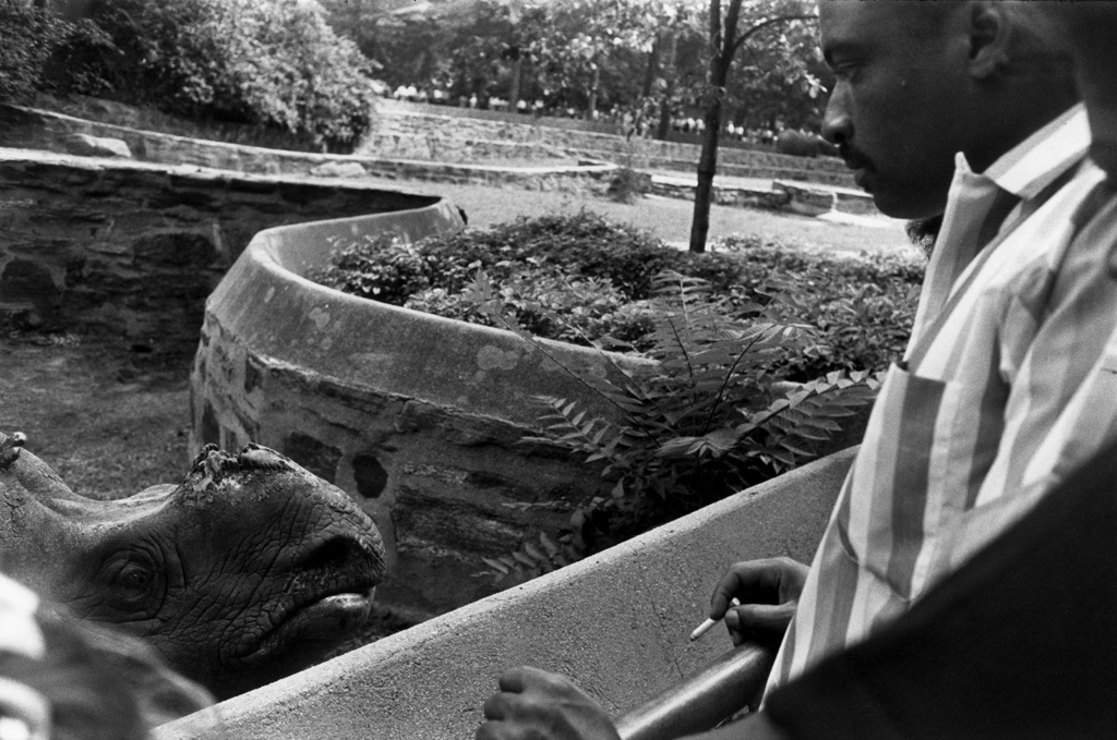 Black-and-white photograph of a man encountering a rhinoceros peering out of its enclosure at him