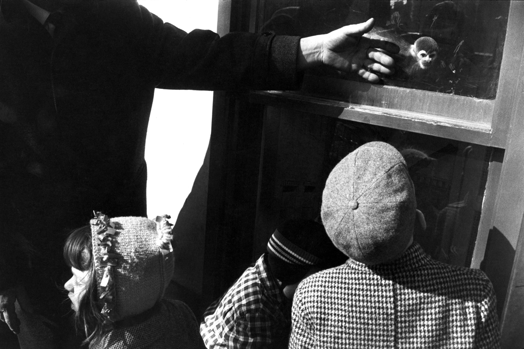 Black-and-white photograph of an adult pointing out to a marmoset monkey behind glass to two small children