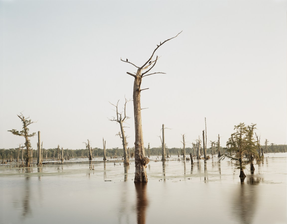 Color photograph of two birds sitting in the branches of a dead tree amid broken off stumps in standing water
