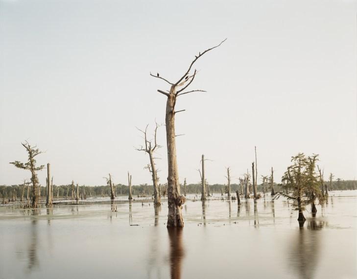 Cypress Tree, Alligator Bayou, 1998, pigment print