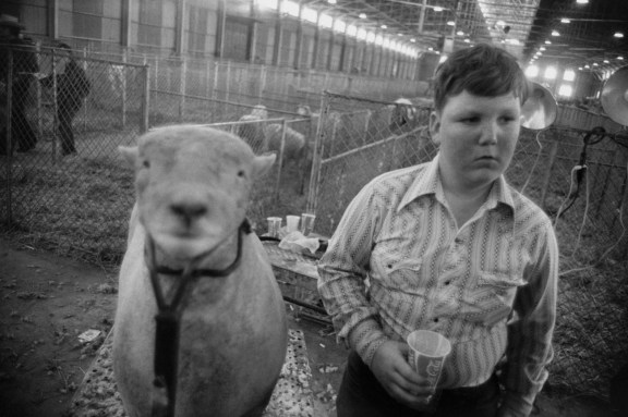 Black-and-white photograph of a sheep and a boy in front of rows of penned sheep