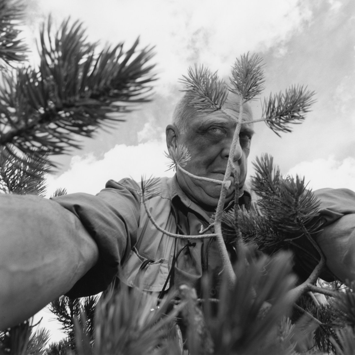 Black and white photograph of a man taking his photograph through pine branches