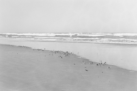 North Beach Peninsula, Pacific County, Washington, 2007, gelatin-silver print