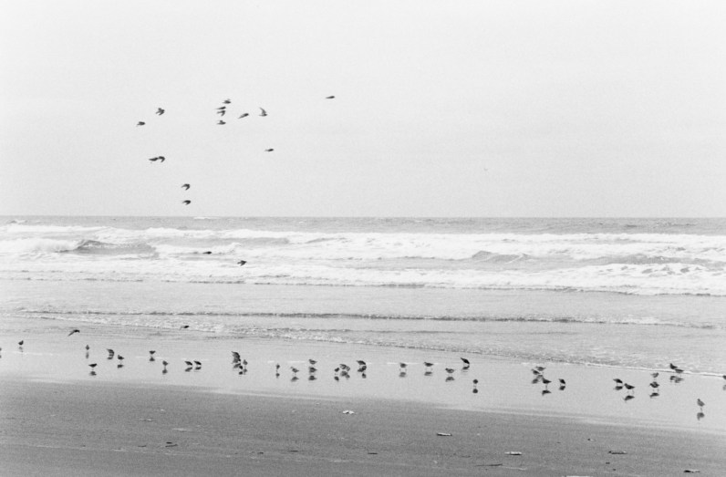 Black-and-white horizontal photograph of birds on a beach with birds flying in the sky