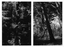 Two black-and-white vertical photographs of tree branches and tree trunks