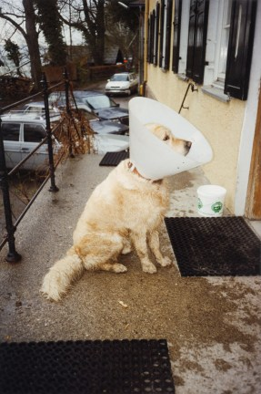 A color photograph of a dog on the sidewalk with a plastic cone on its head