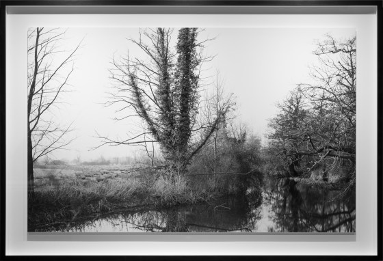 The river Stour from deadman's bridge near Flatford. (Winter), 2013, gelatin-silver contact print
