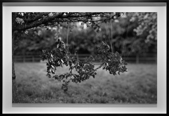 For Cookham read Holt, 2013, gelatin-silver contact print