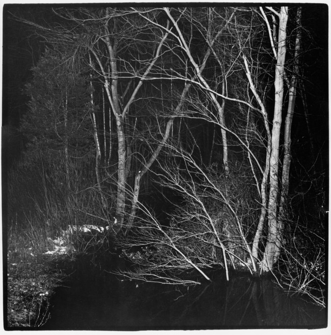 Black-and-white photograph of thin bare trees lit up with a camera flash at night