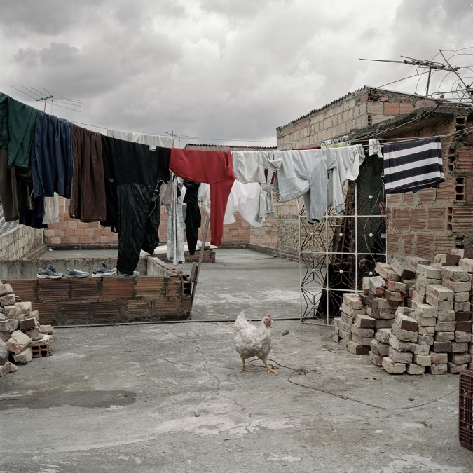Color photograph of a white chicken standing under a line of clothes hung on a line