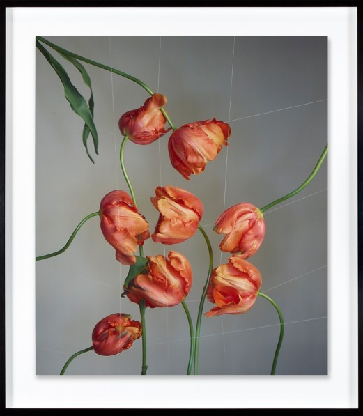 Color photograph of reddish-orange tulips emerging into the frame from all sides, flowers meeting in the center