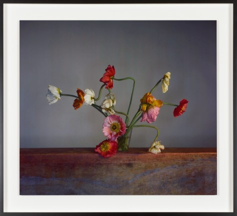 Color photograph of red, white, yellow, orange, and pink flowers in a glass on a gray background