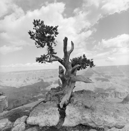 Lee Friedlander, Grand Canyon National Park, Arizona, 1997