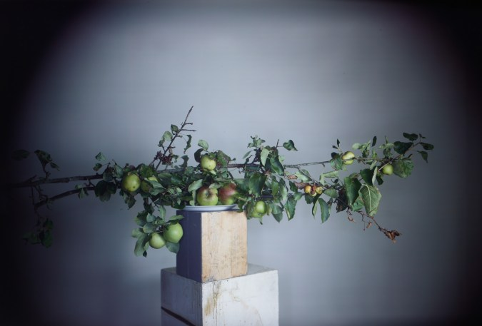 Color photograph of apple tree branches arranged on a stack of wood plinths.