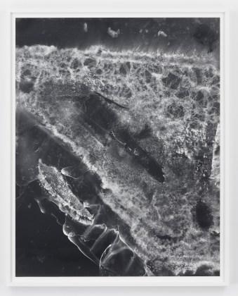 Eileen Quinlan, Voyage Out  , 2016, Gelatin silver print