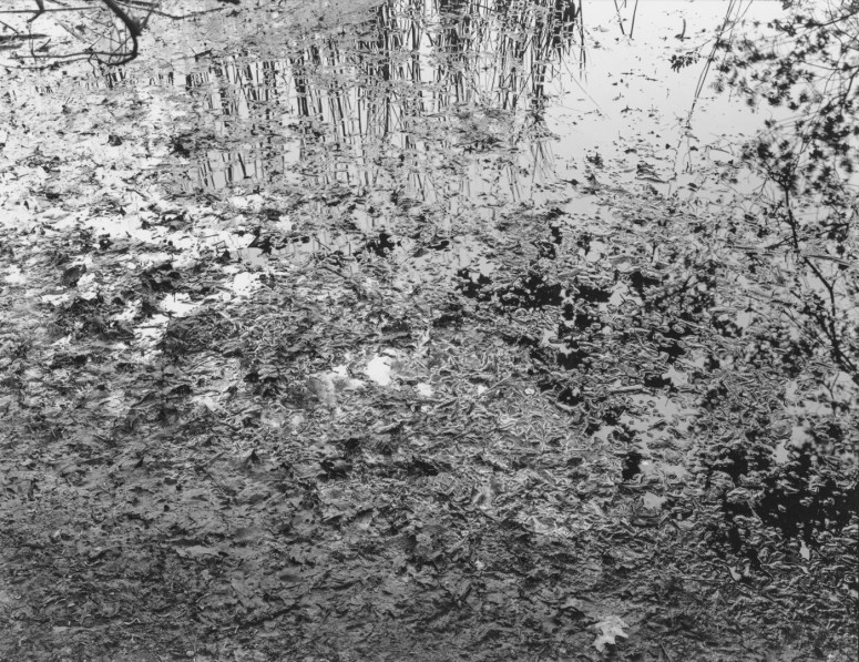 Black-and-white photograph of mud and plant matter on a riverbank