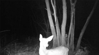 Black-and-white nighttime photograph of a deer