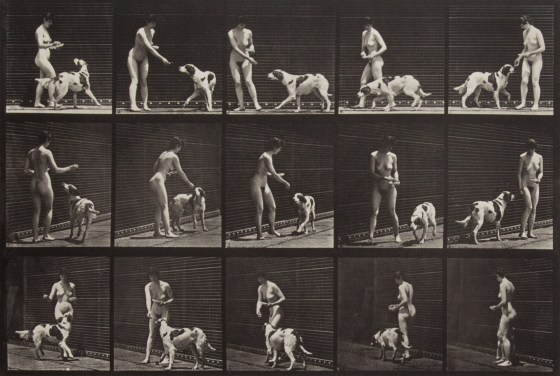 Eadweard Muybridge, Feeding a dog, 1887, collotype