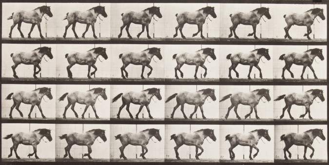 Four horizontal rows of horizontal black-and-white photographs of a draft horse walking