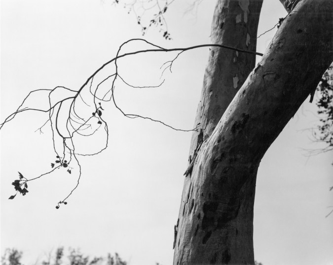 A black and white photograph of a tree trunk on the right, with a thin branch in silhouette on the left