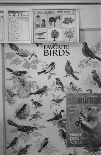 black-and-white vertical photo of a poster showing different species of birds and other nature imagery