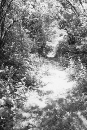 An Old Forest Road, 2013