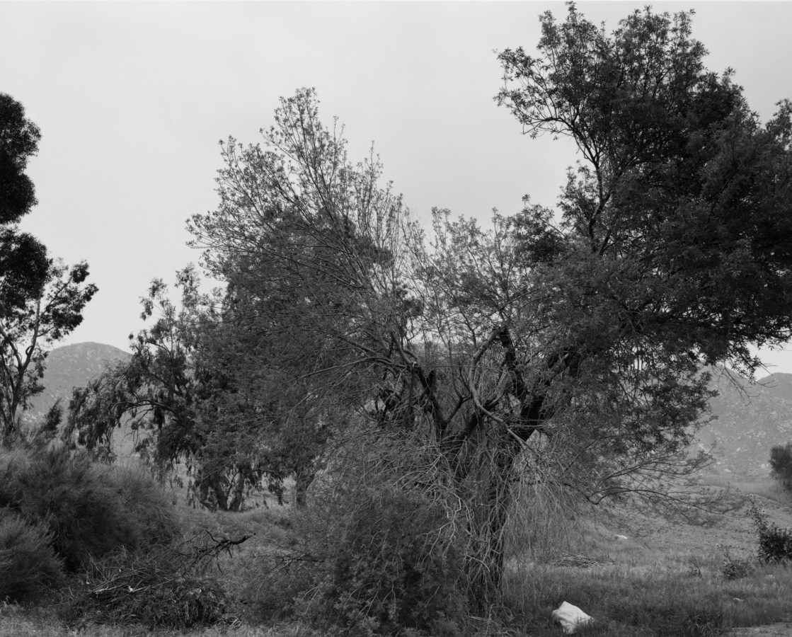 Black-and-white photograph of trees against a slate grey sky