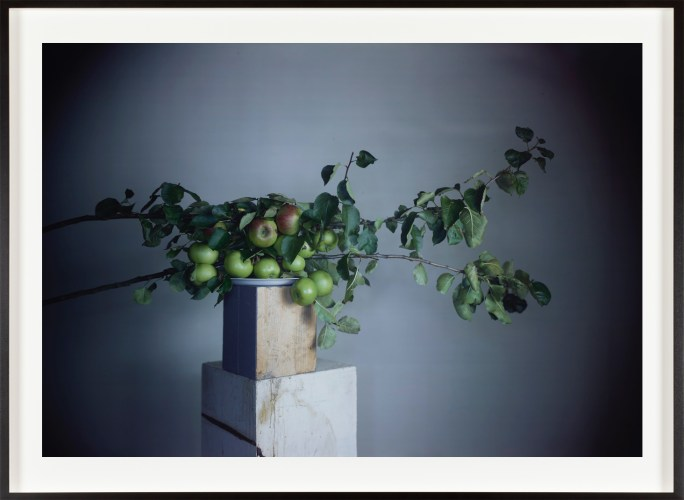 Color photograph of several apple tree branches, balanced on a stack of two wooden plinths.