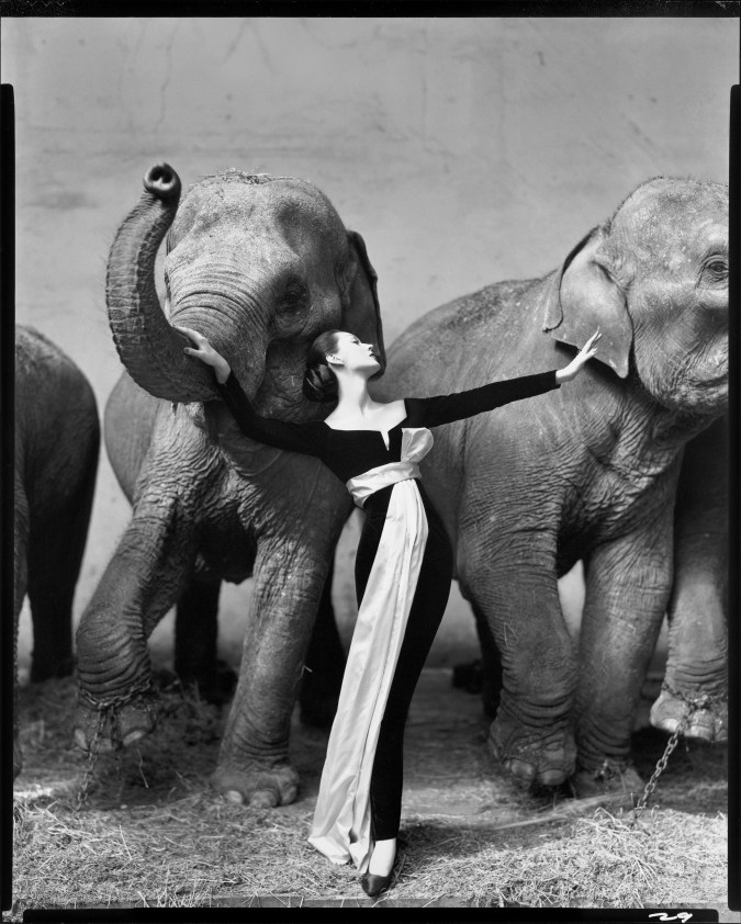 A black and white photograph of a woman in an evening gown, between two elephants. The left elephant has it's trunk raised, and the woman's hand is on the trunk.
