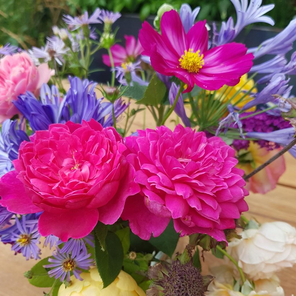 Garten im August