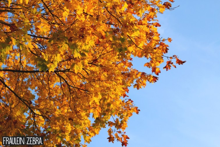 Herbstmomente7