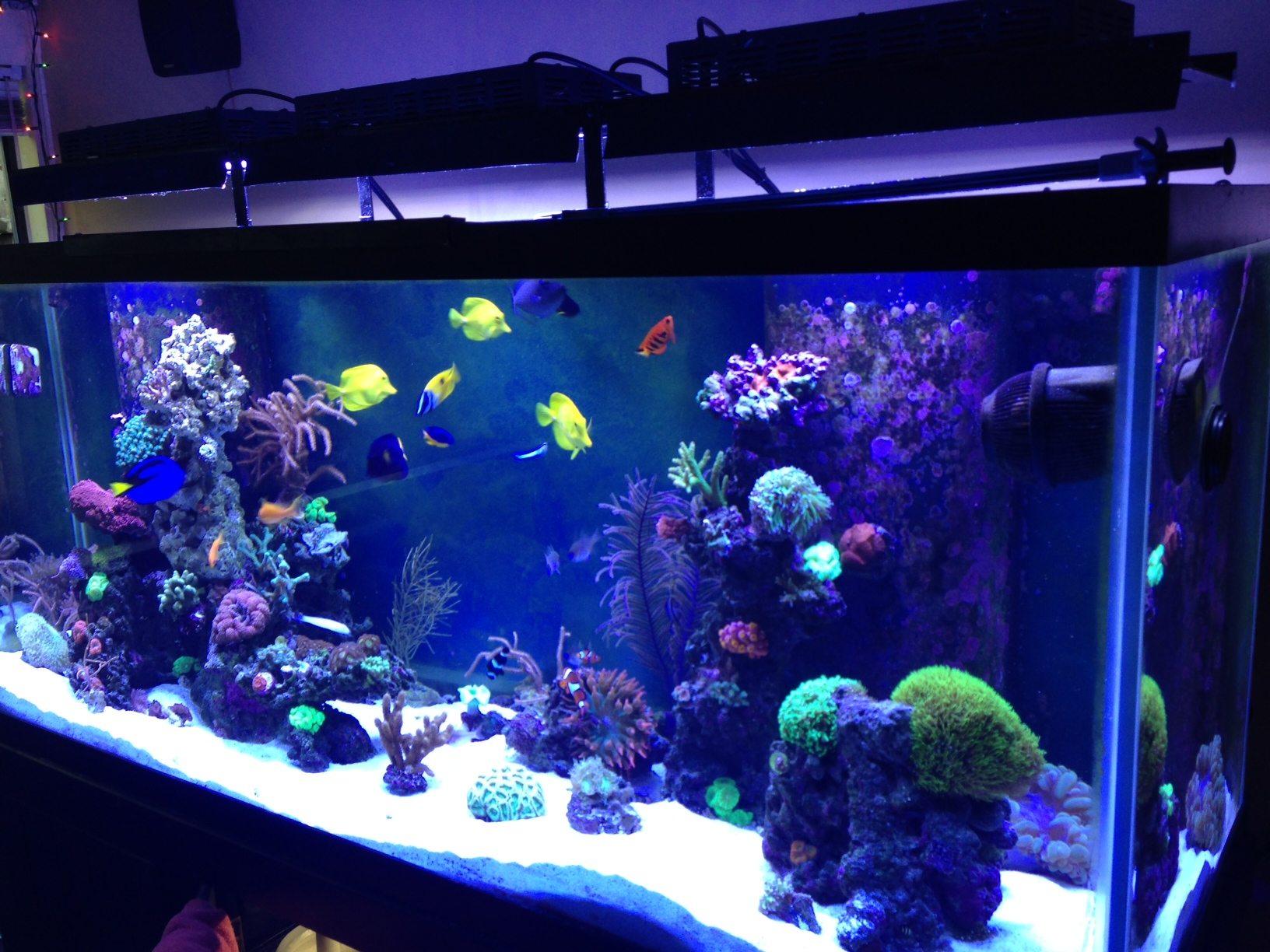 Online Aquarium Store Canada