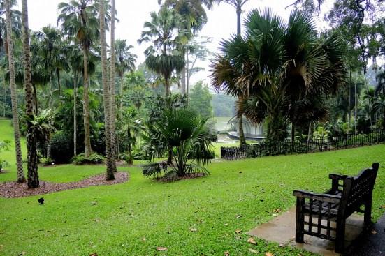 Ogrody-Botaniczne-Singapuru-02