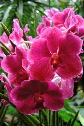 Ogrody-Botaniczne-Singapuru-30