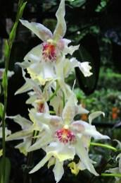 Ogrody-Botaniczne-Singapuru-36