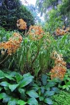 Ogrody-Botaniczne-Singapuru-52