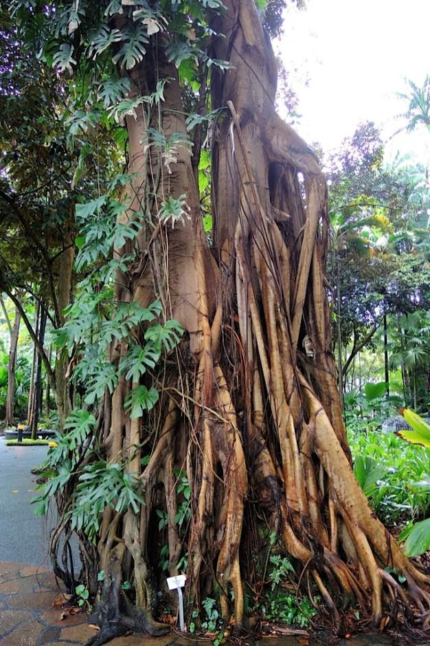Ogrody-Botaniczne-Singapuru-53