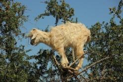 kozy-na-drzewie-maroko-003