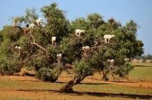 kozy-na-drzewie-maroko-006