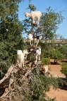 kozy-na-drzewie-maroko-007