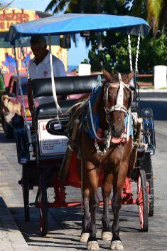 Kuba_Varadero-022-1