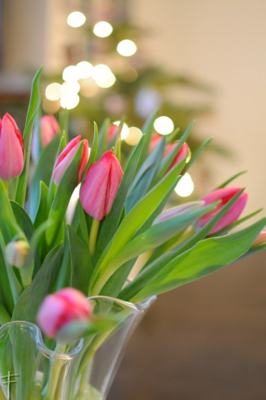 choinka i tulipany tulipany 01