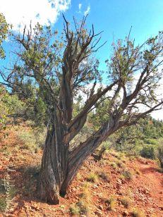 podróż przez Stany Zjednoczone-atrakcje USA-co zobaczyć w stanie Arizona-Sedona-Red Rock State Park-10