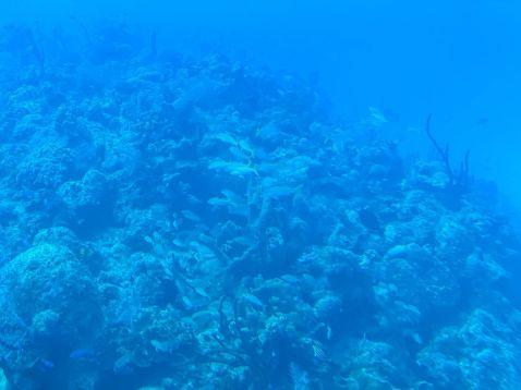 Atlantis Submarines Cayman-łódź podwodna-atrakcje Kajmany co robić zobaczyć na Kajmanach-002