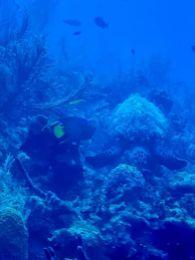 Atlantis Submarines Cayman-łódź podwodna-atrakcje Kajmany co robić zobaczyć na Kajmanach-006