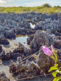 Kajmany atrakcje Wielki Kajman co robić zobaczyć na Kajmanach_Piekło_Cayman Hel-006