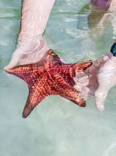 Kajmany atrakcje co warto zrobić Starfish Point plaża z rozgwiazdami na Kajmanach-001